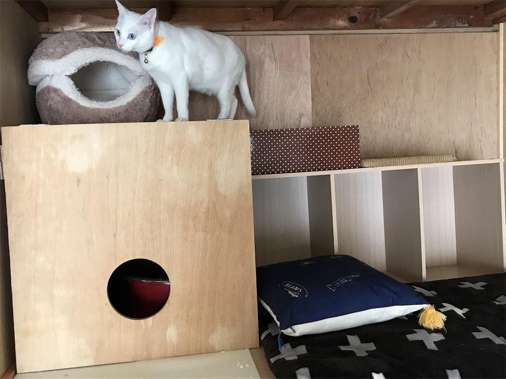 f:id:Gomez-cat:20180226195933j:image