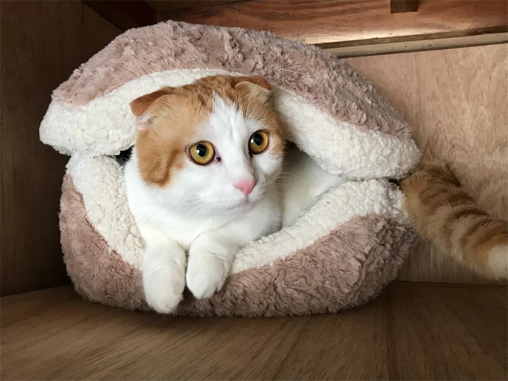 f:id:Gomez-cat:20180226200949j:image