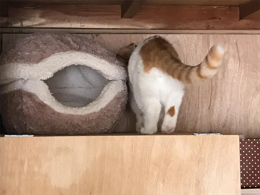 f:id:Gomez-cat:20180226201008j:image