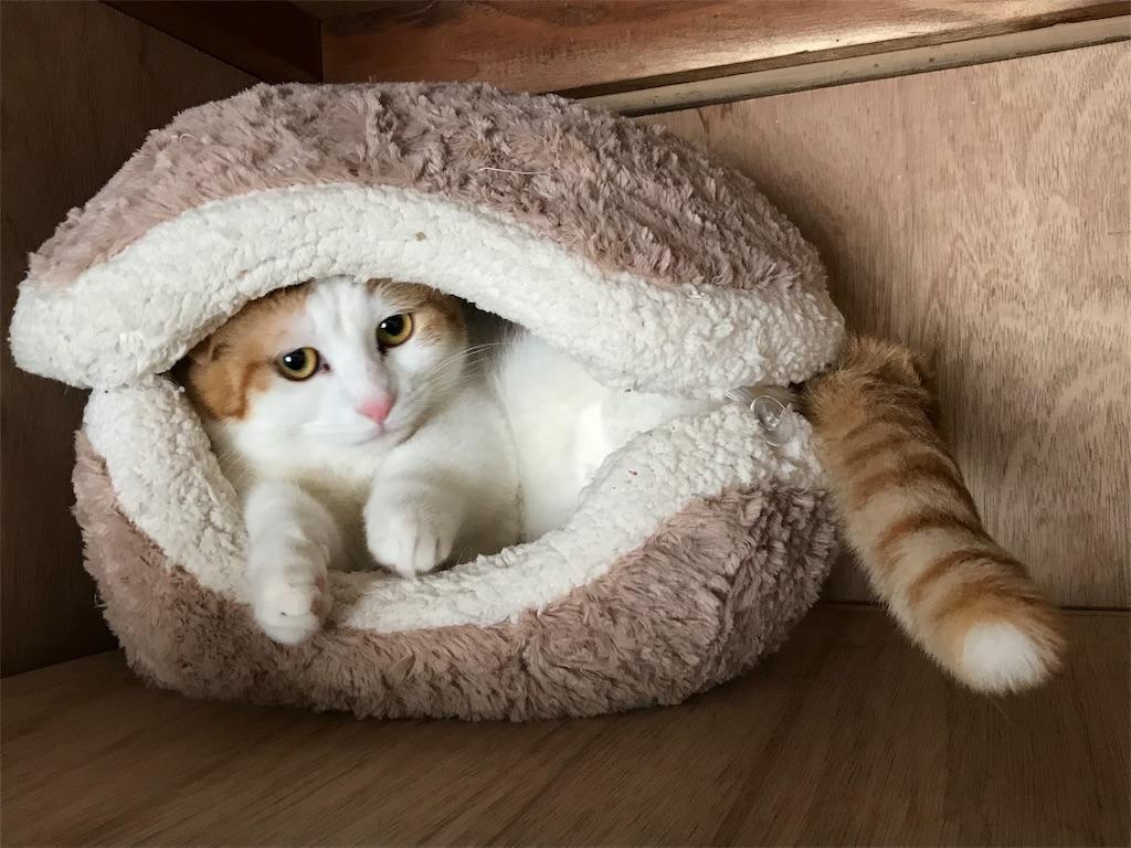 f:id:Gomez-cat:20180226201033j:image