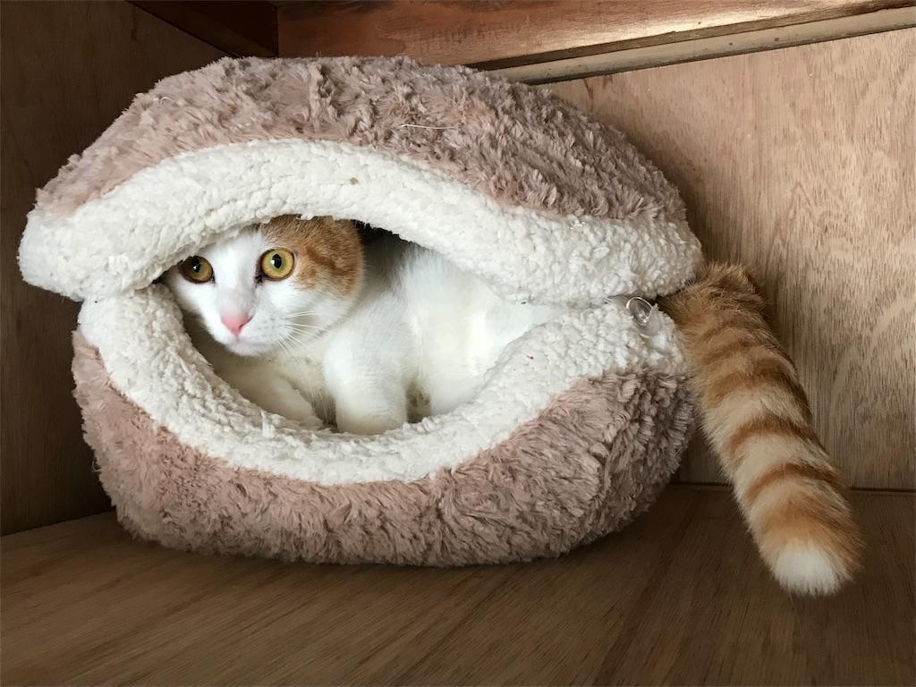 f:id:Gomez-cat:20180226201128j:image