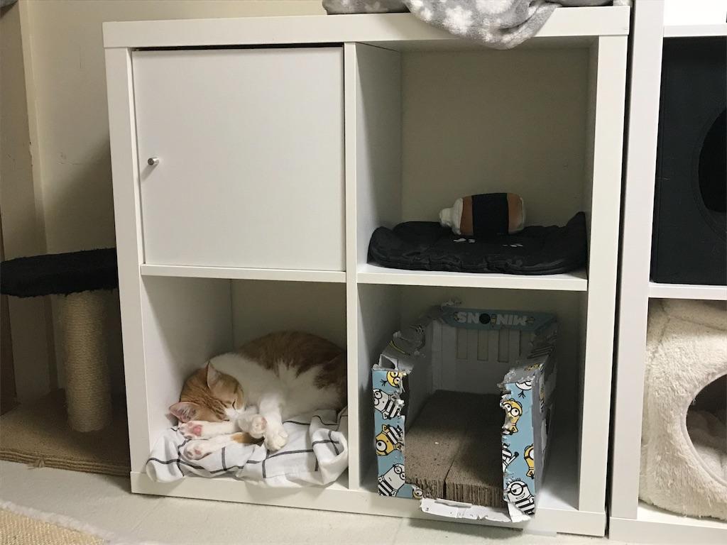 f:id:Gomez-cat:20180226201154j:image