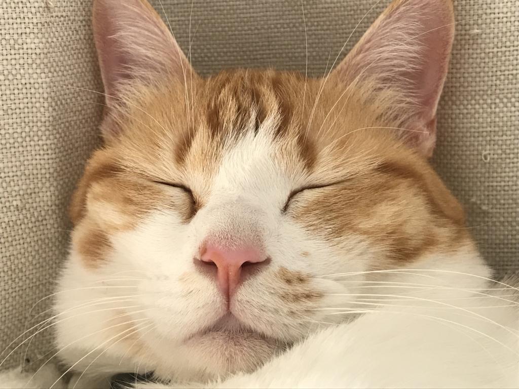 f:id:Gomez-cat:20180308005425j:plain
