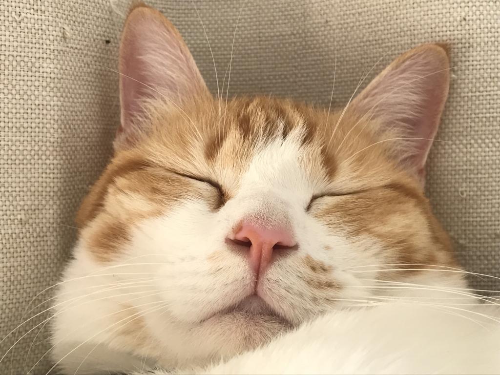 f:id:Gomez-cat:20180308005436j:plain