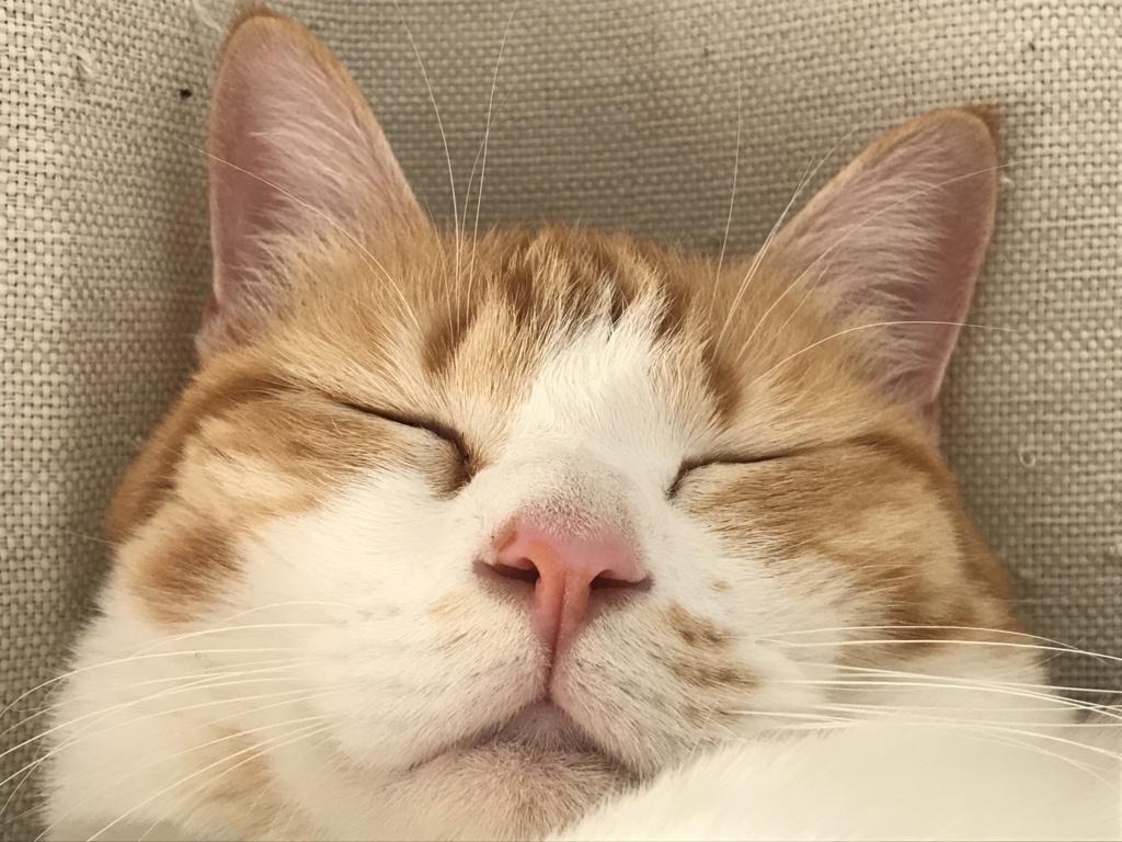 f:id:Gomez-cat:20180308005442j:plain