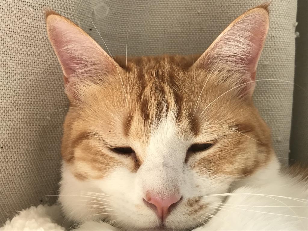 f:id:Gomez-cat:20180308005452j:plain