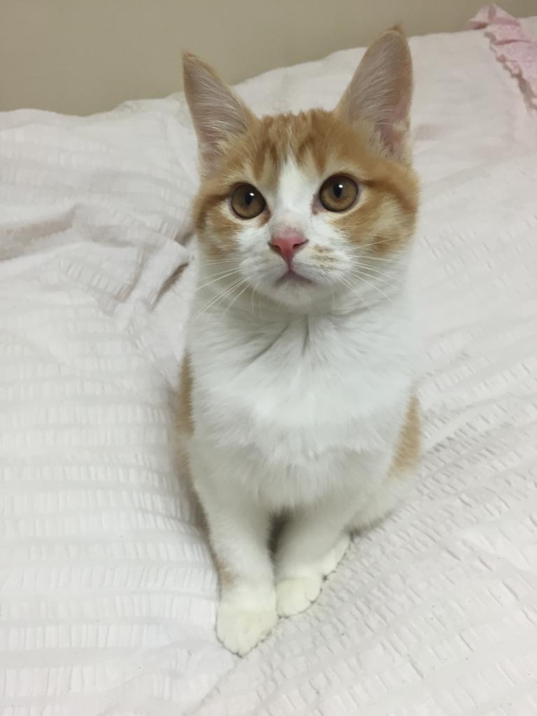 f:id:Gomez-cat:20180327195127j:plain