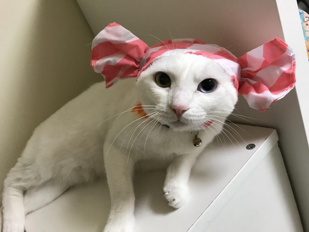 f:id:Gomez-cat:20180812001604j:plain