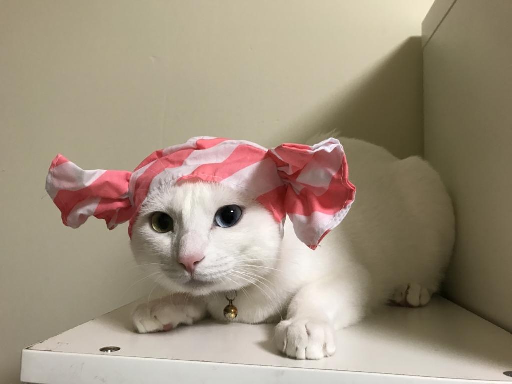 f:id:Gomez-cat:20180812001626j:plain