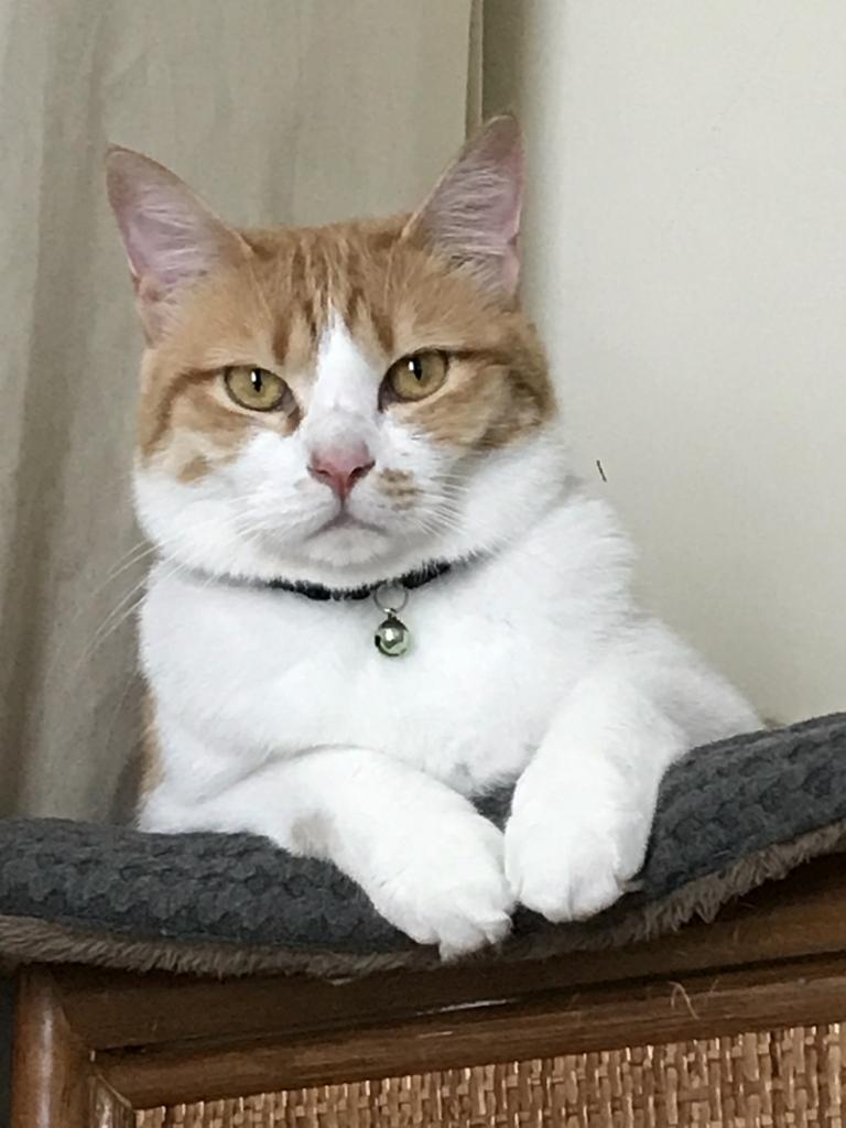 f:id:Gomez-cat:20180812162231j:plain
