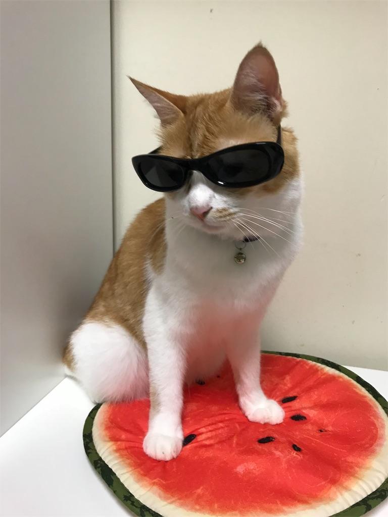f:id:Gomez-cat:20180814003948j:image