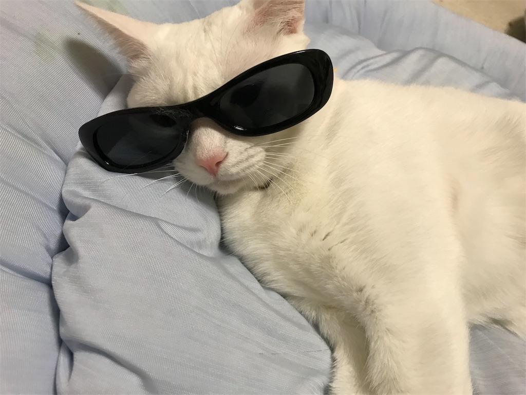f:id:Gomez-cat:20180814004003j:image