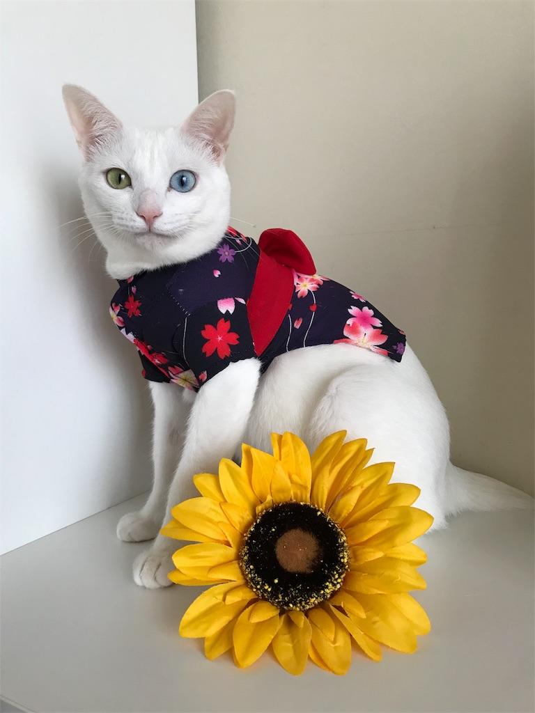 f:id:Gomez-cat:20180814213548j:image