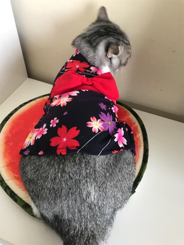 f:id:Gomez-cat:20180814213552j:image