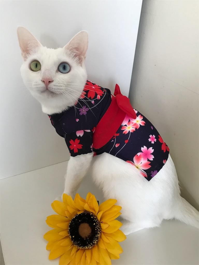 f:id:Gomez-cat:20180814213600j:image