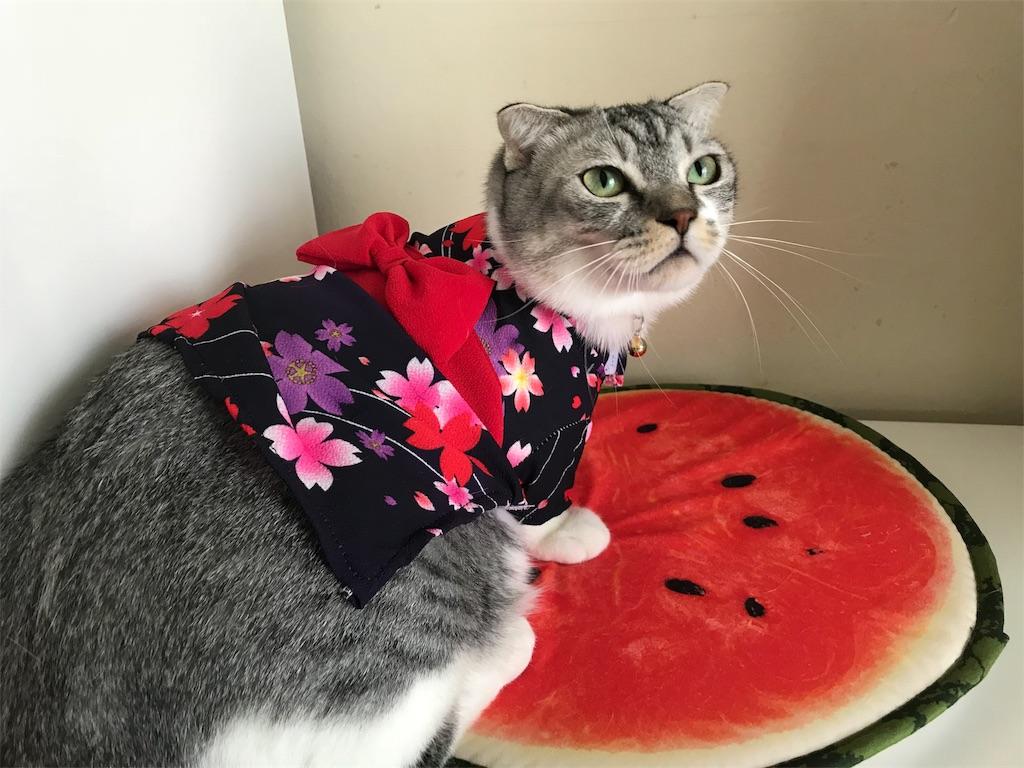 f:id:Gomez-cat:20180814213613j:image