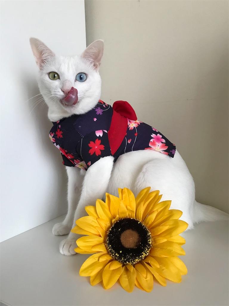 f:id:Gomez-cat:20180814213617j:image