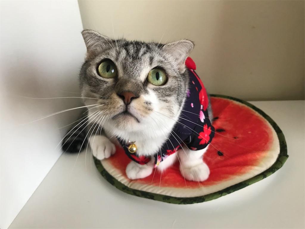 f:id:Gomez-cat:20180814213624j:image