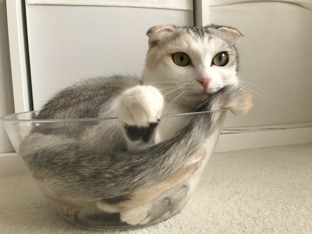 f:id:Gomez-cat:20180906133033j:plain