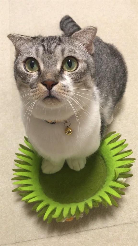 f:id:Gomez-cat:20180911213342j:image