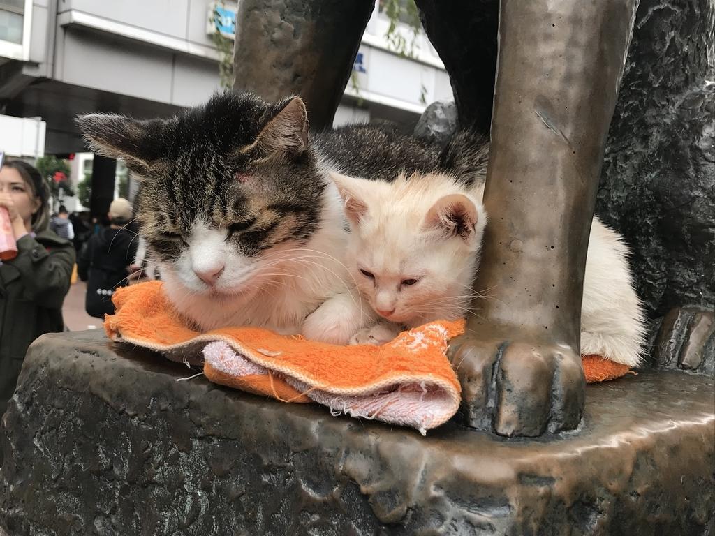 f:id:Gomez-cat:20181104152729j:plain