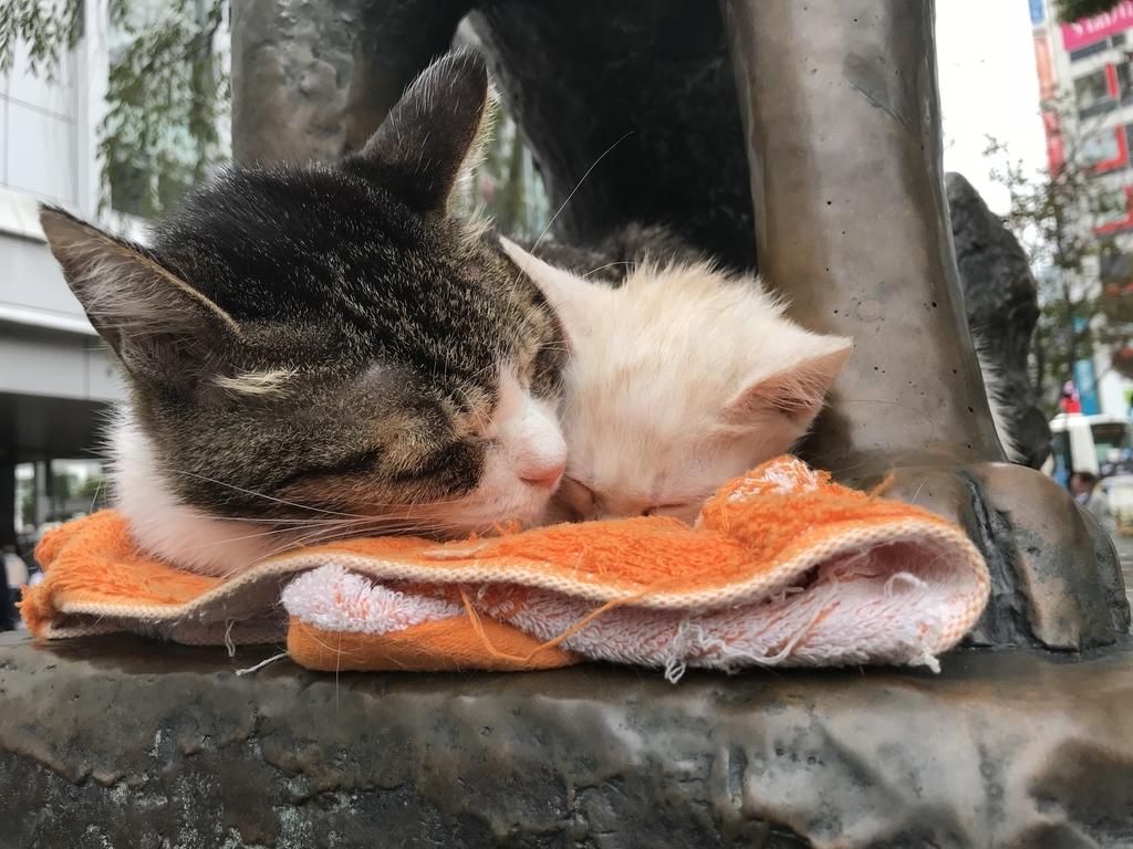 f:id:Gomez-cat:20181104152811j:plain