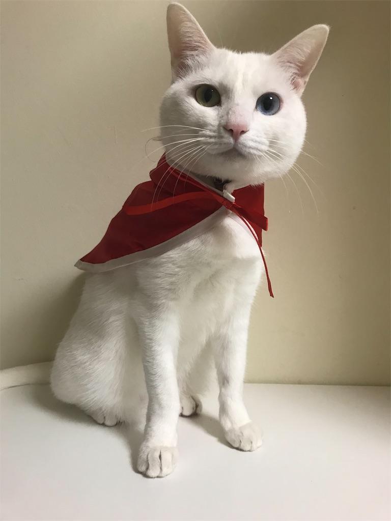 f:id:Gomez-cat:20181104183437j:image