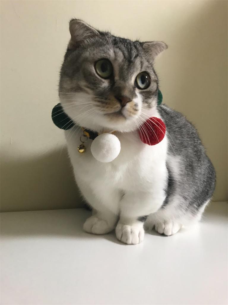 f:id:Gomez-cat:20181105153942j:image