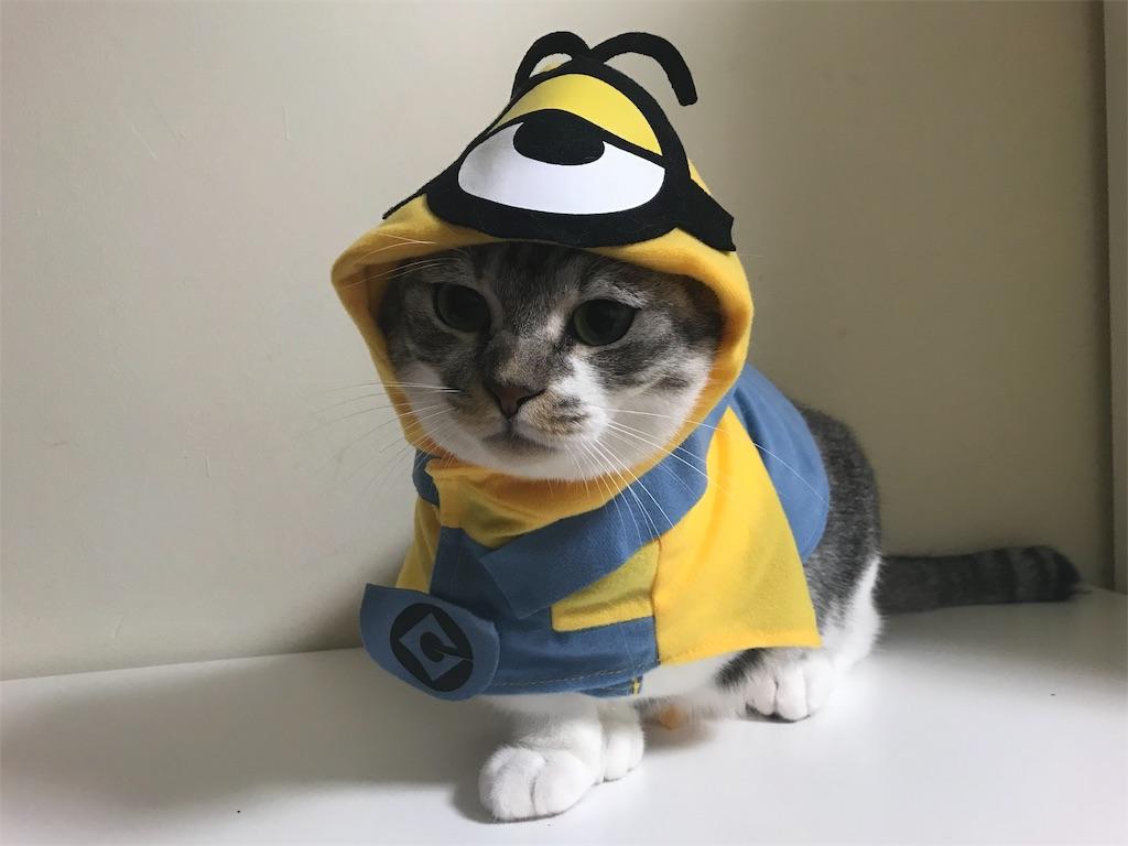 f:id:Gomez-cat:20181106001353j:image