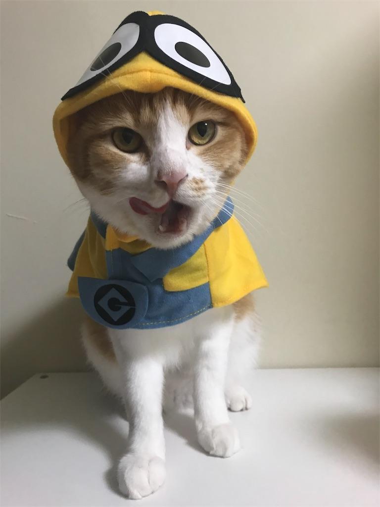f:id:Gomez-cat:20181106001408j:image