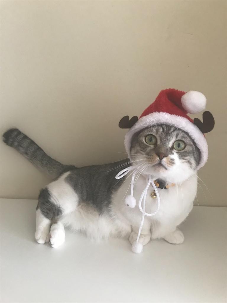 f:id:Gomez-cat:20181108122930j:image