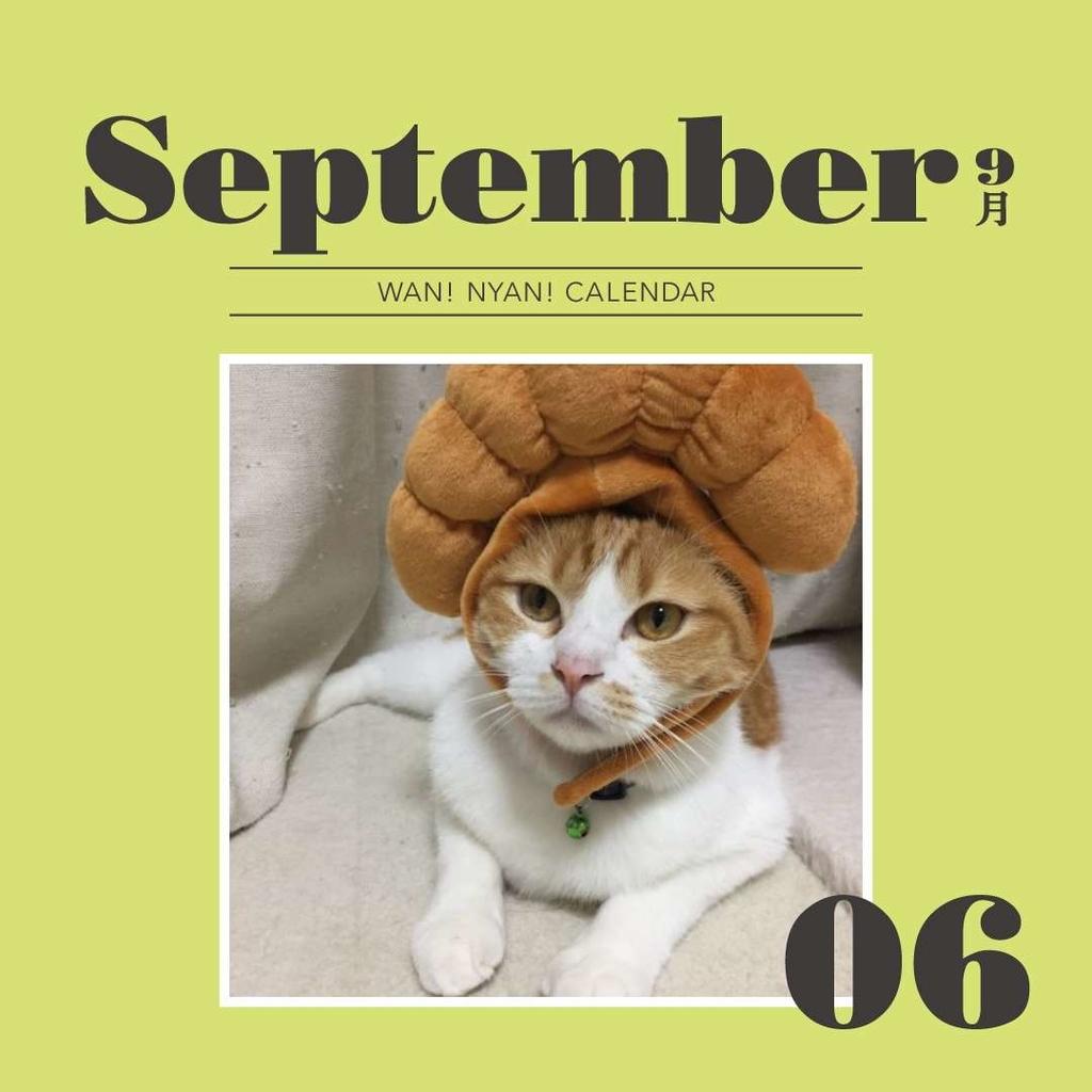 f:id:Gomez-cat:20181109115901j:plain