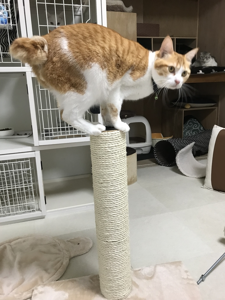 f:id:Gomez-cat:20181109125005j:plain