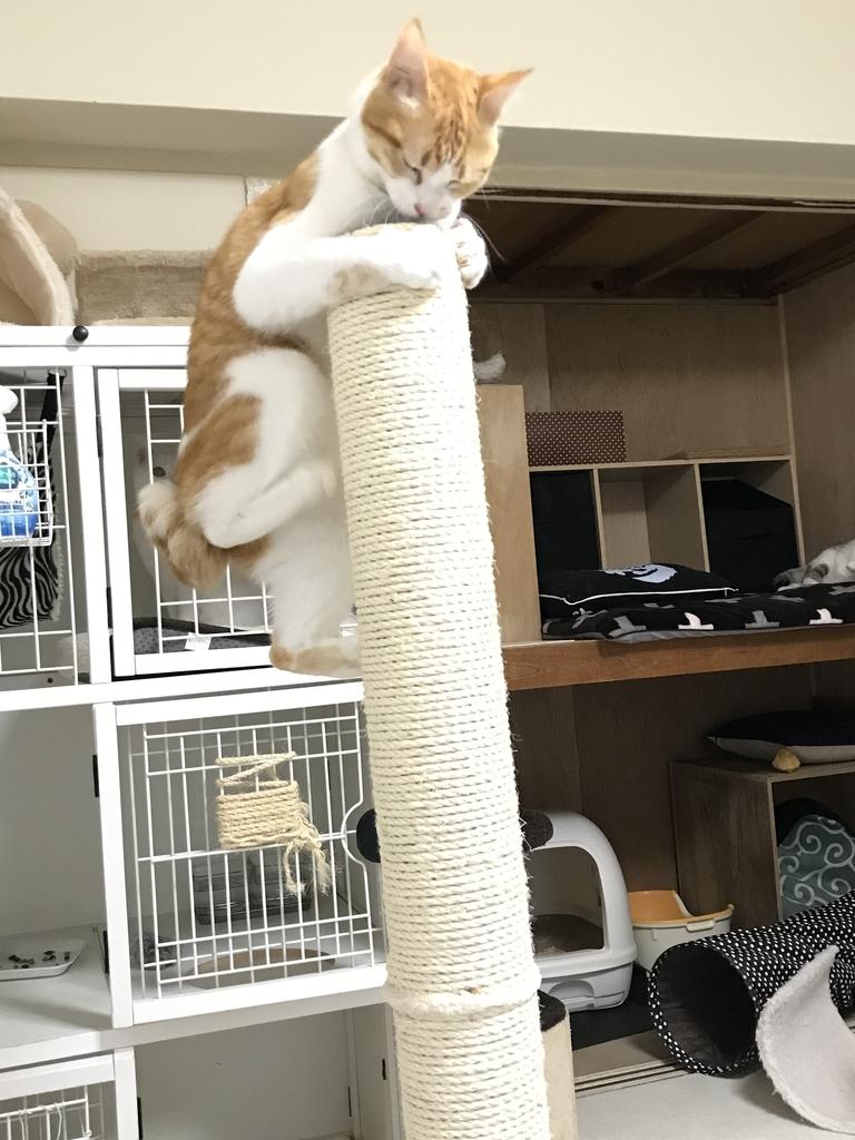 f:id:Gomez-cat:20181109125458j:plain