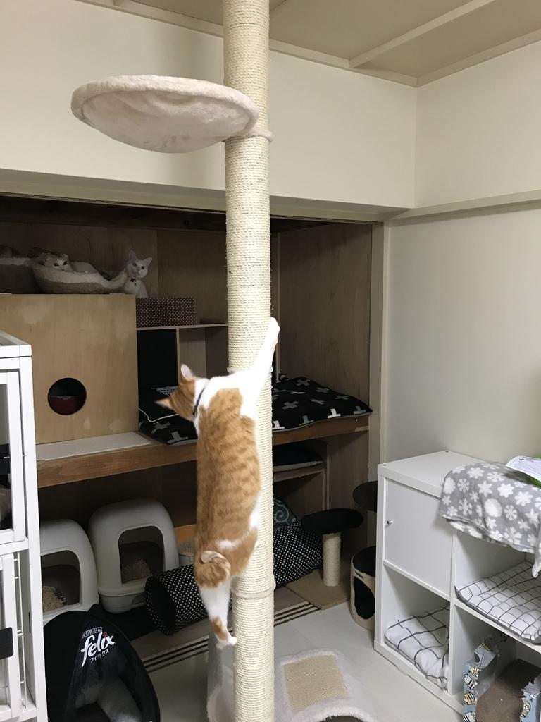 f:id:Gomez-cat:20181109131054j:plain