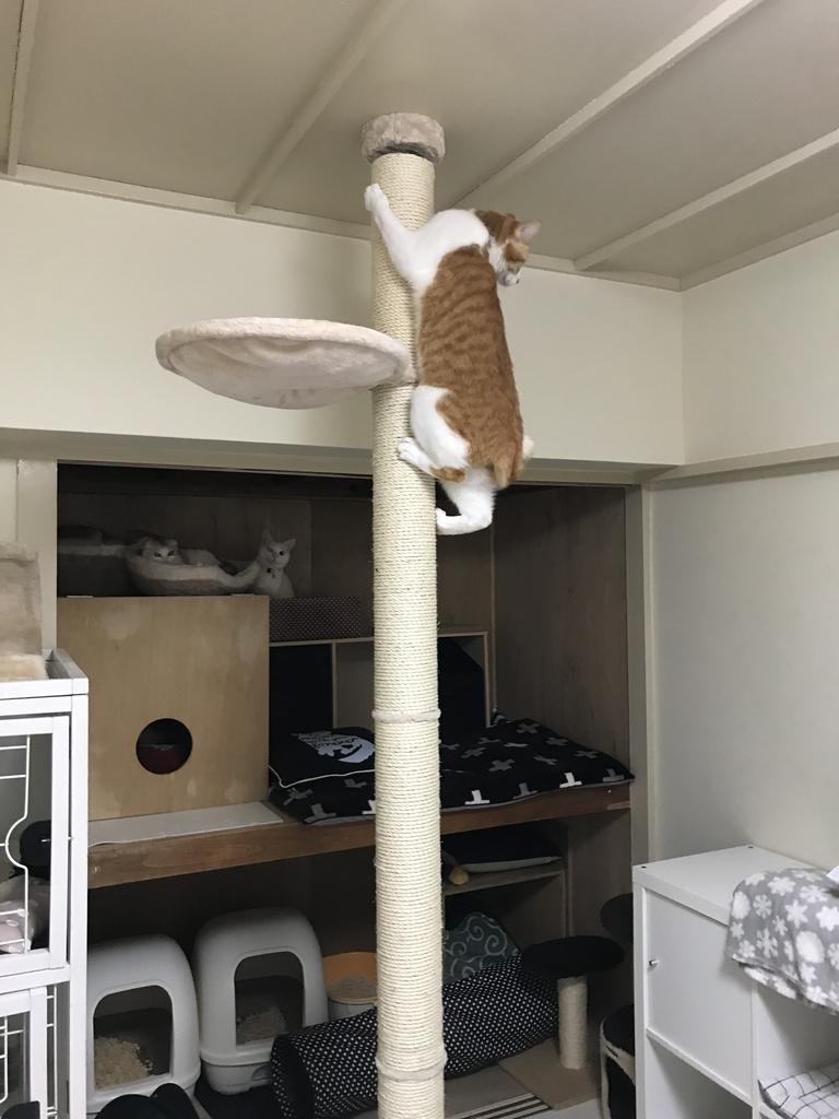 f:id:Gomez-cat:20181109131142j:plain