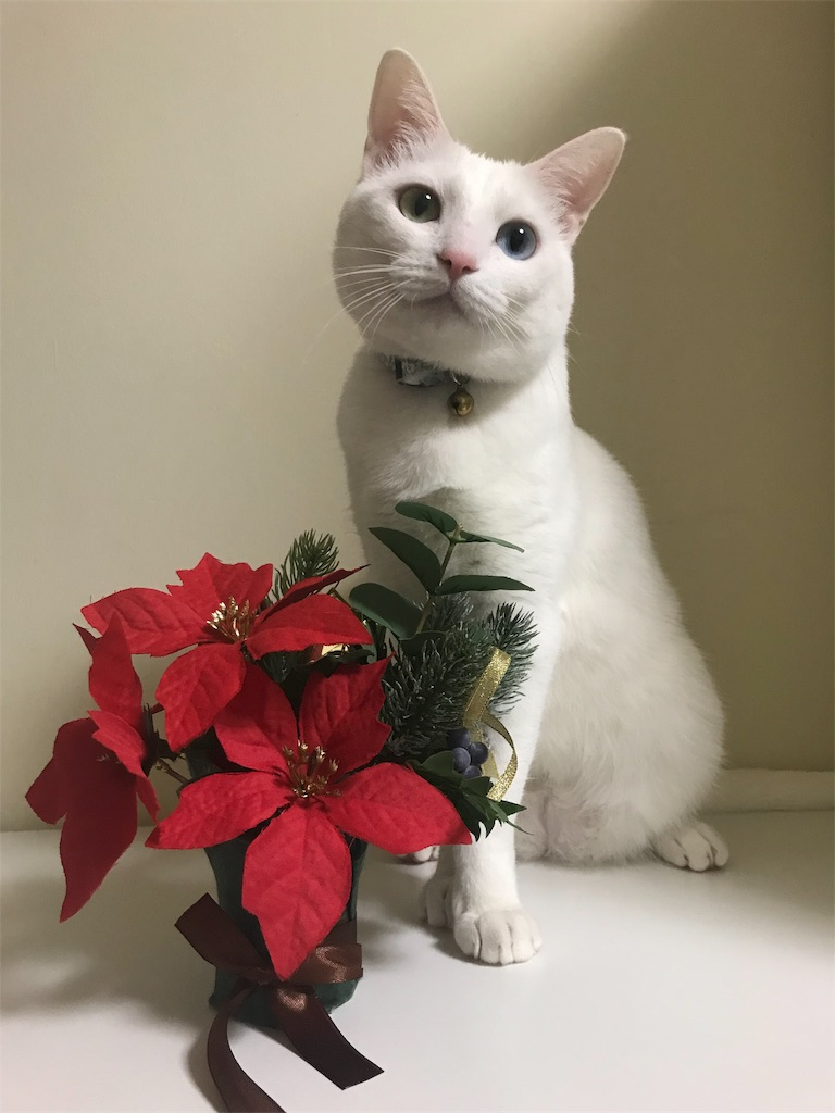 f:id:Gomez-cat:20181110202008j:image