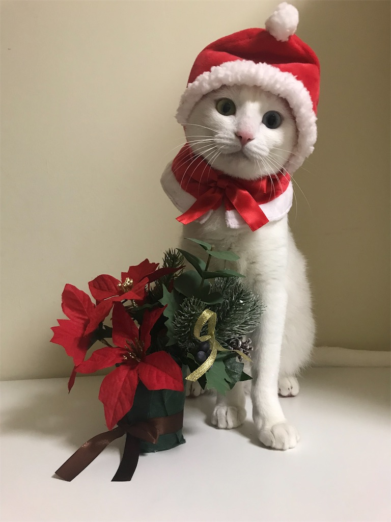 f:id:Gomez-cat:20181110202012j:image