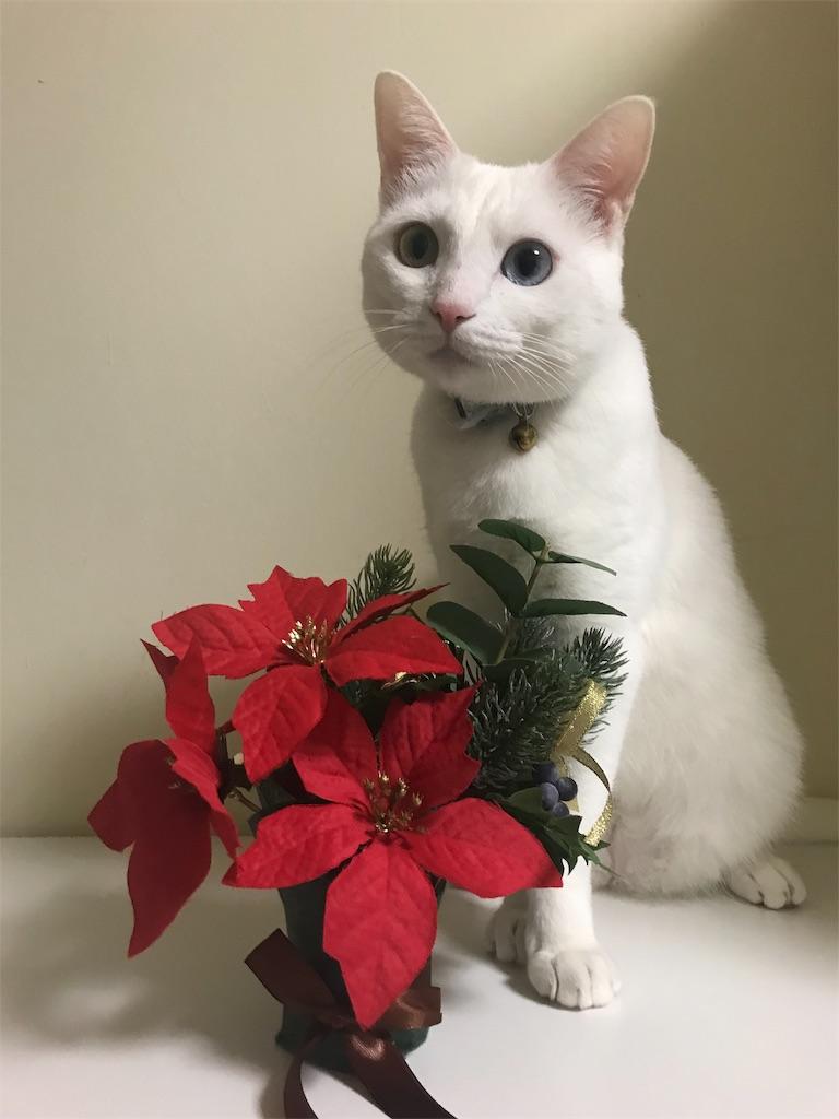 f:id:Gomez-cat:20181110202016j:image