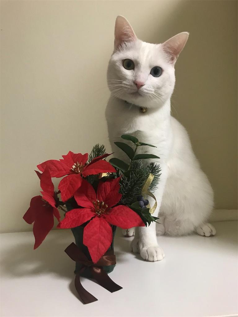 f:id:Gomez-cat:20181110202019j:image