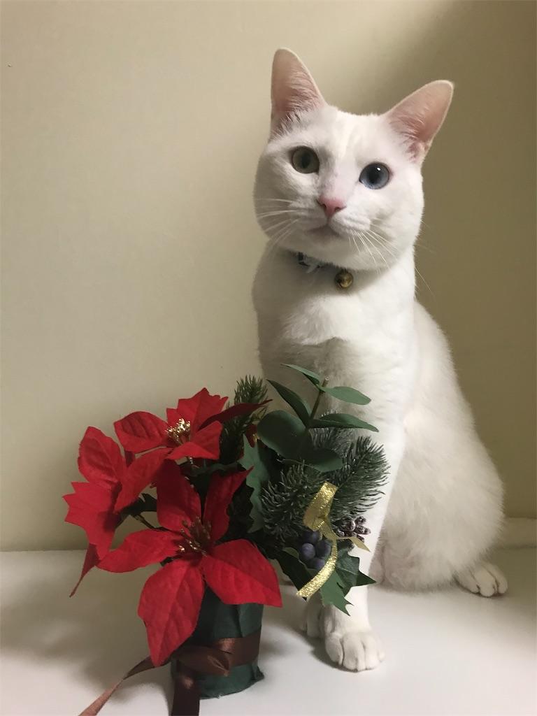 f:id:Gomez-cat:20181110202022j:image