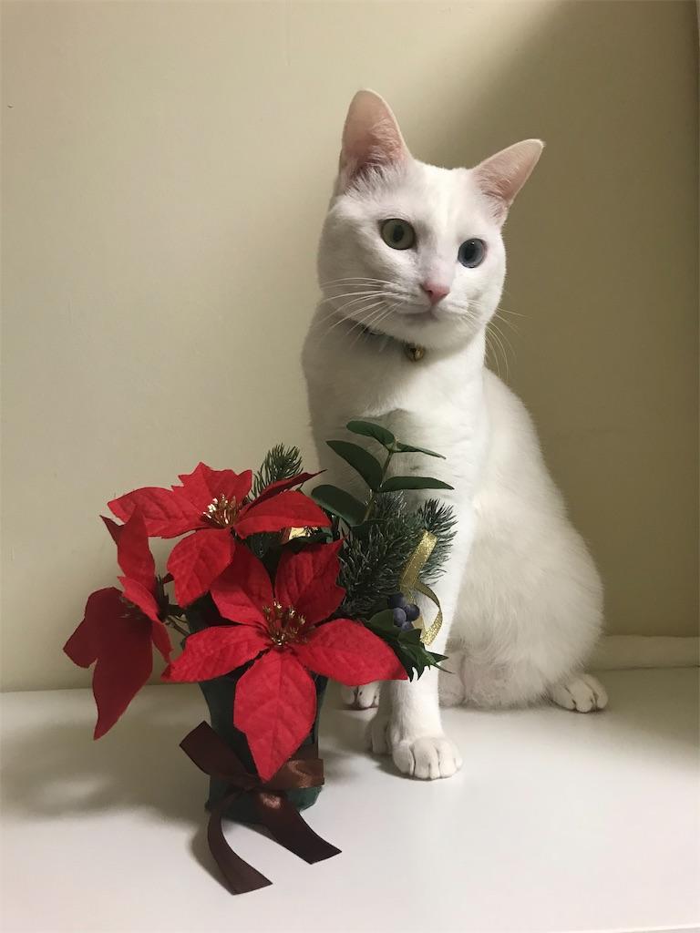 f:id:Gomez-cat:20181110202025j:image