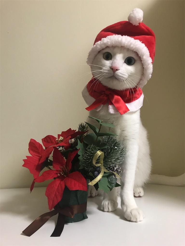 f:id:Gomez-cat:20181110202032j:image