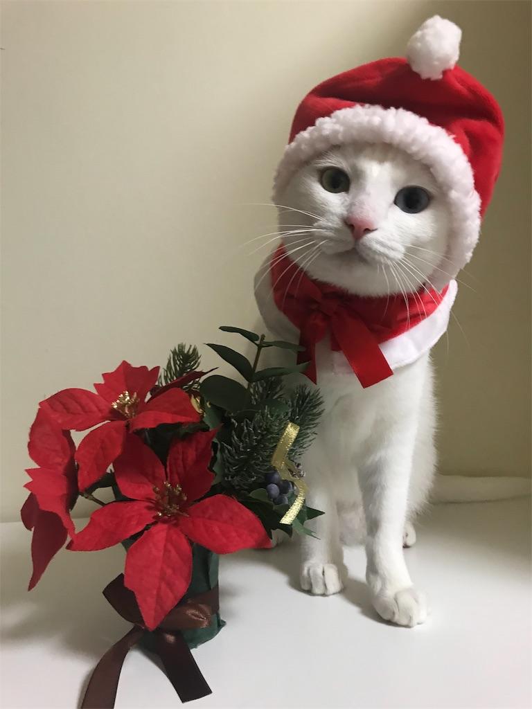 f:id:Gomez-cat:20181110202038j:image