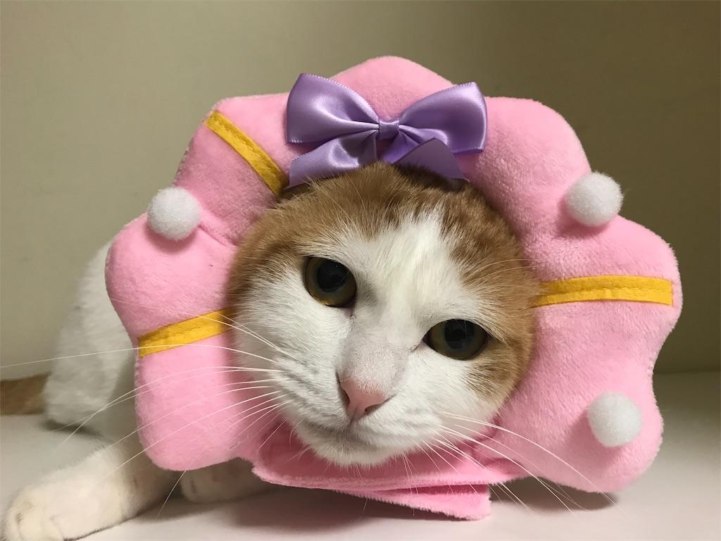 f:id:Gomez-cat:20181112220100j:image