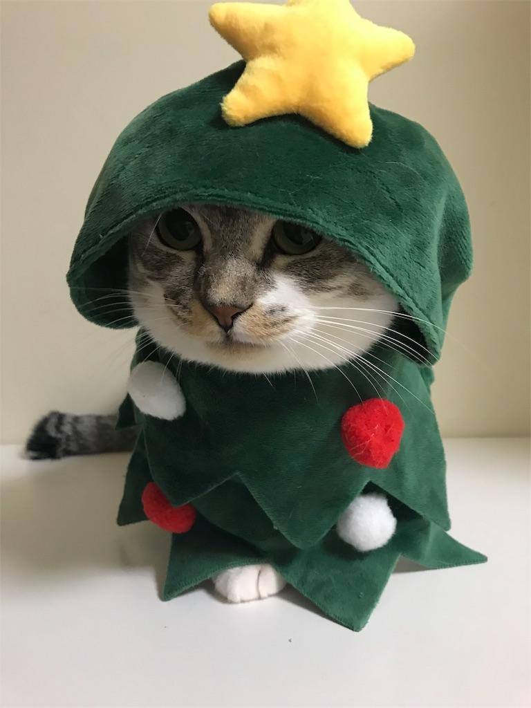 f:id:Gomez-cat:20181112220105j:image