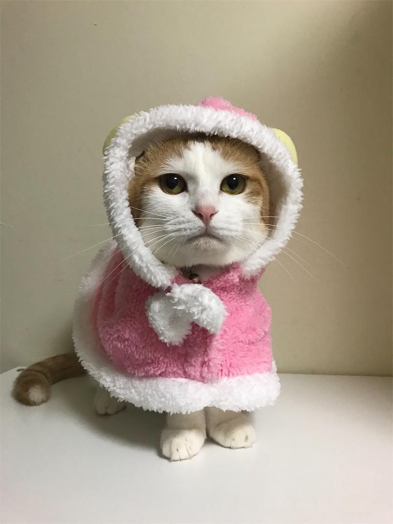 f:id:Gomez-cat:20181112220108j:image