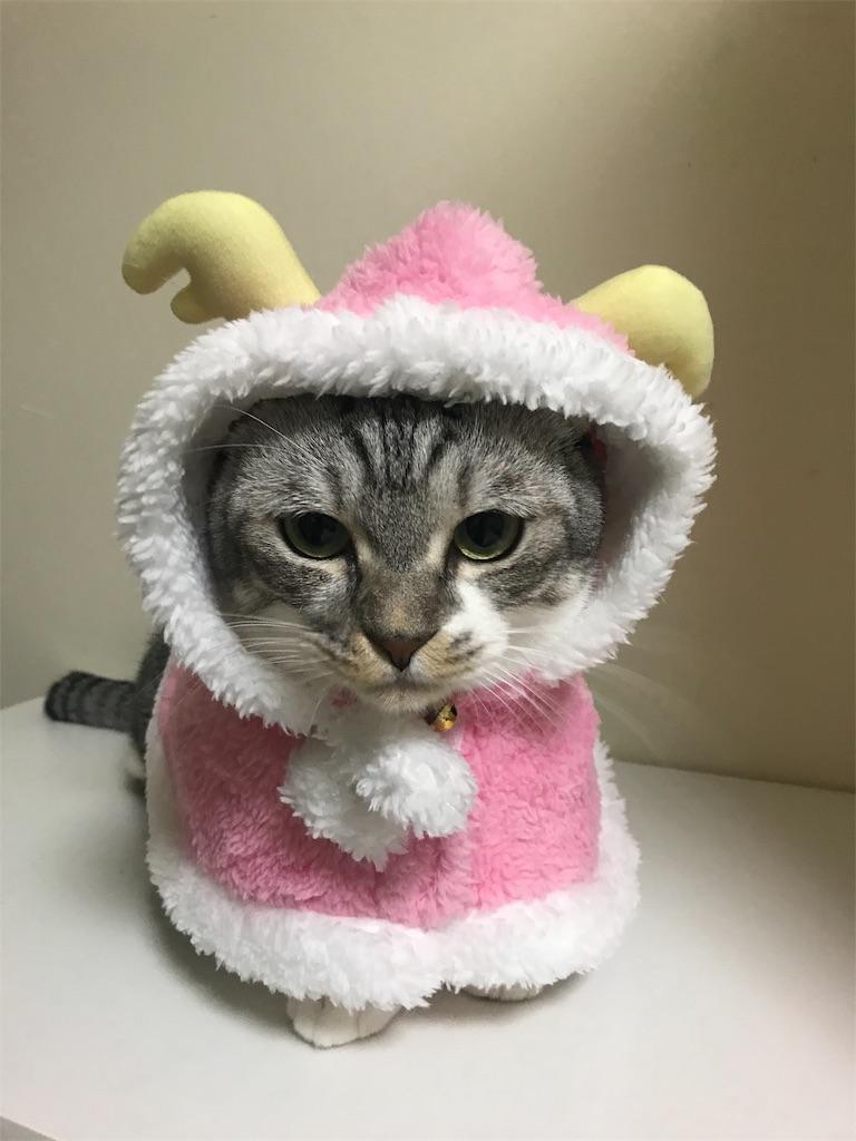 f:id:Gomez-cat:20181112220115j:image