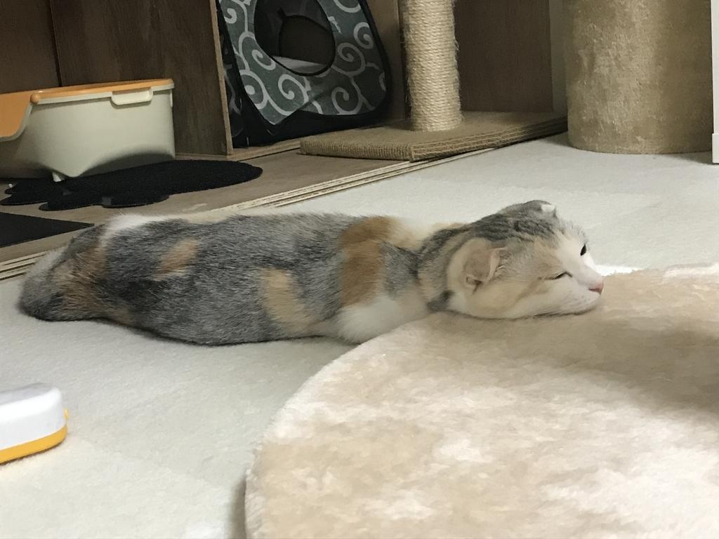 f:id:Gomez-cat:20181114105447j:plain