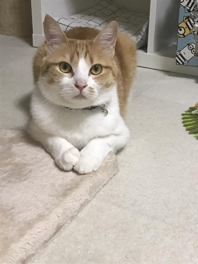 f:id:Gomez-cat:20181114110751j:plain